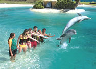 swim with dolfins